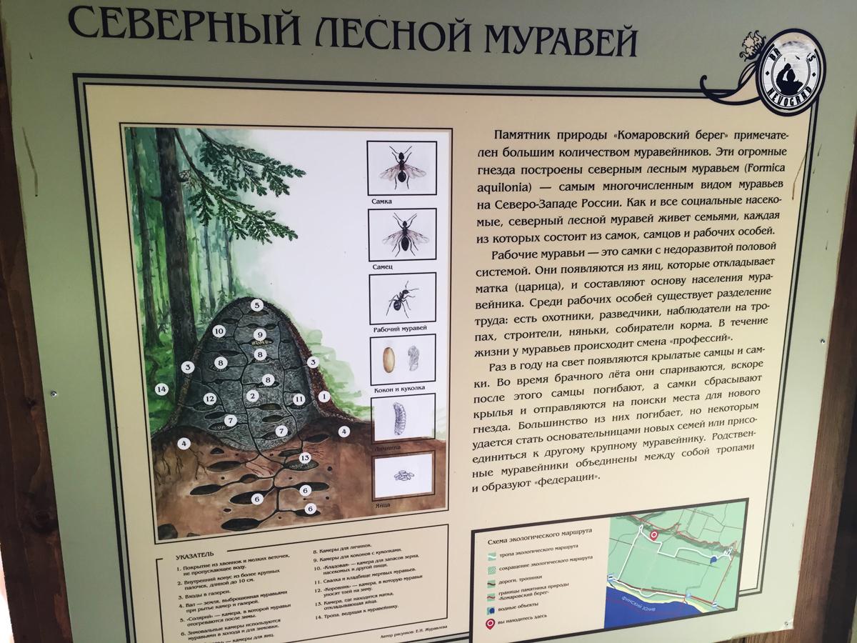 Эко-тропа в Комарово