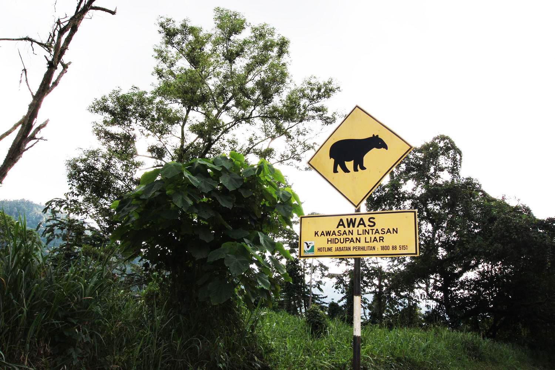 Малайзия и Индонезия что нужно знать водителю_16